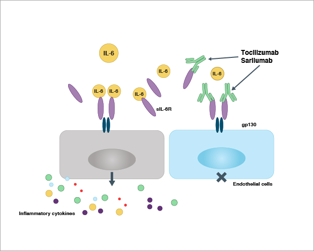 IL_6 mediated pathway diagram
